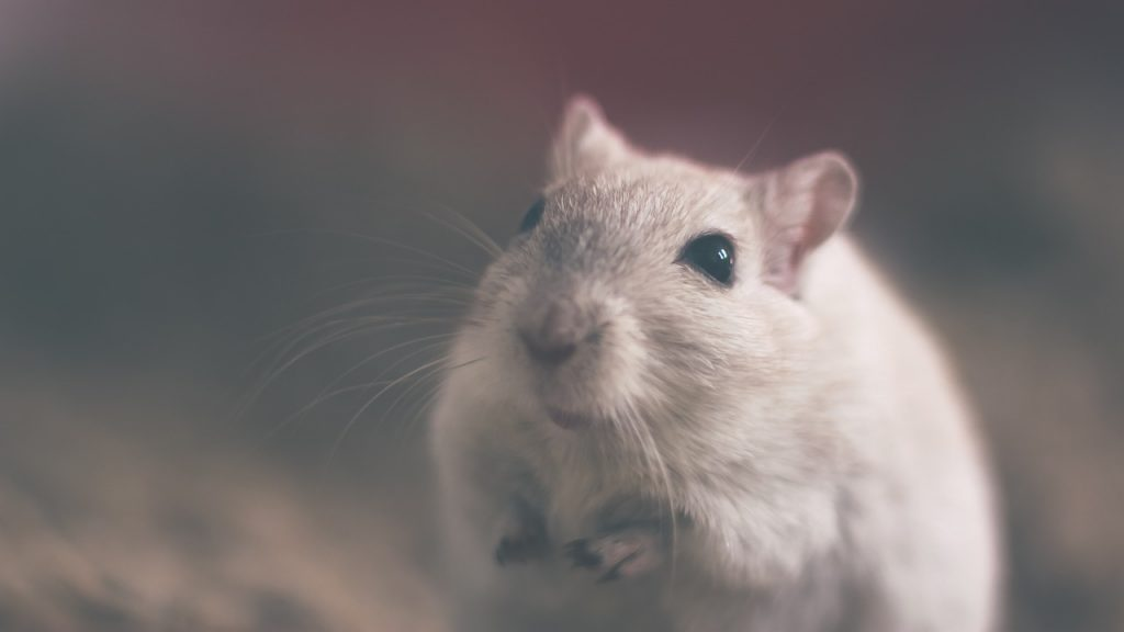 mouse-801843_1280